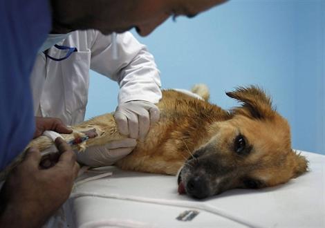 vétérinaire en colère