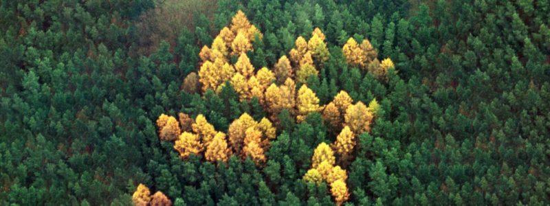 Vue aérienne d\'une forêt de conifères, le 14 novembre 2000, près du village allemand de Zernikow (Brandebourg).